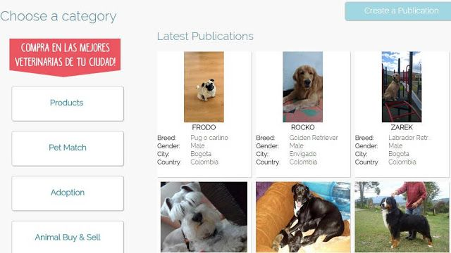 animalmatch-red-social-donde-animales-son-prioridad